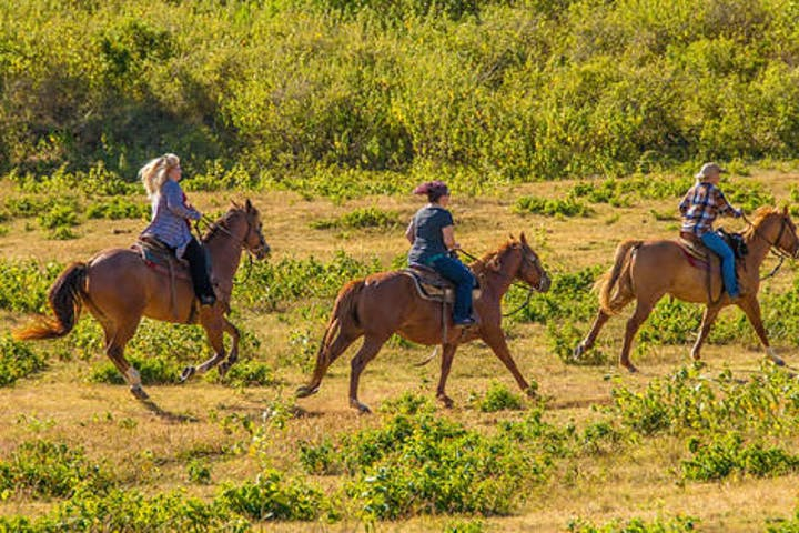 Advanced Horseback Riding on Oahu or Honolulu Area